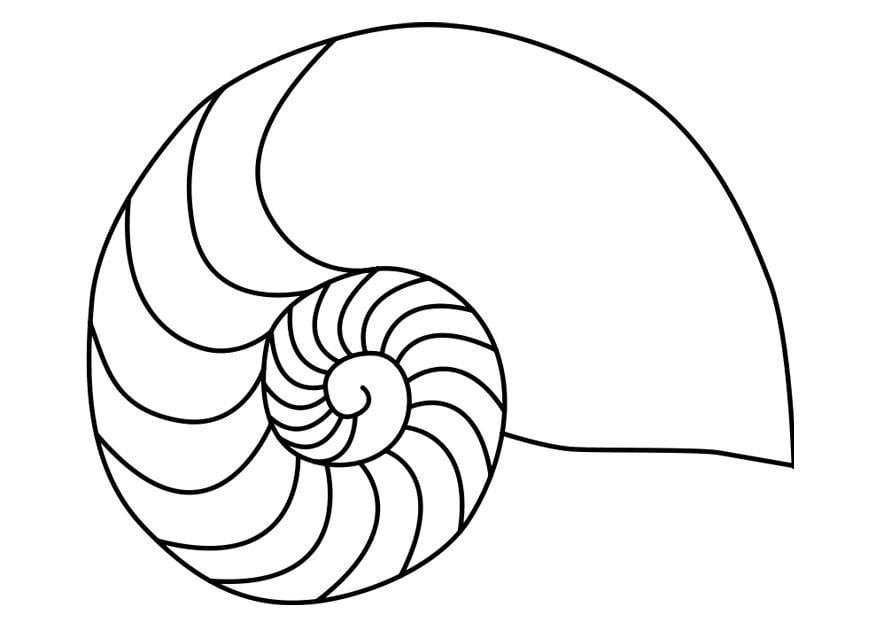 Afbeelding Dolfijn Kleurplaat Kleurplaat Schelp Nautilus Inktvis Gratis Kleurplaten Om