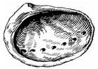 Kleurplaat schelp - zeeoor