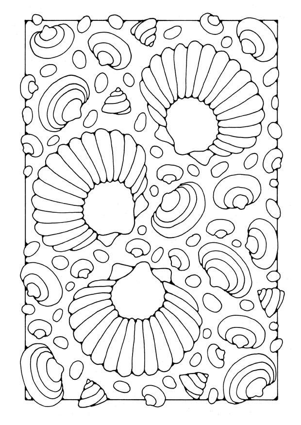 kleurplaat schelpen afb 21910