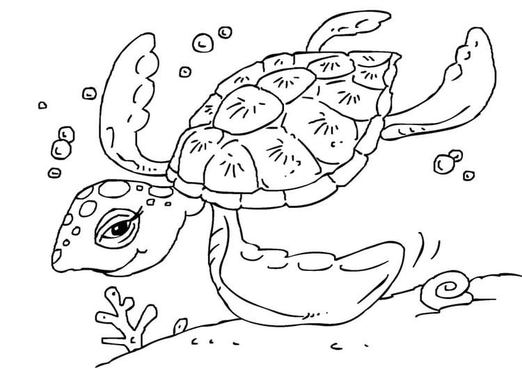 Kleurplaten Zeeschildpad.De Zeeschildpad Kleurplaat