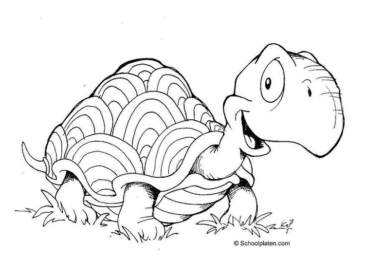 Kleurplaat Schildpad Afb 2883