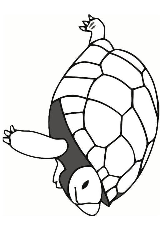 schildpad knutselen