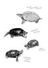 Kleurplaat schildpadden