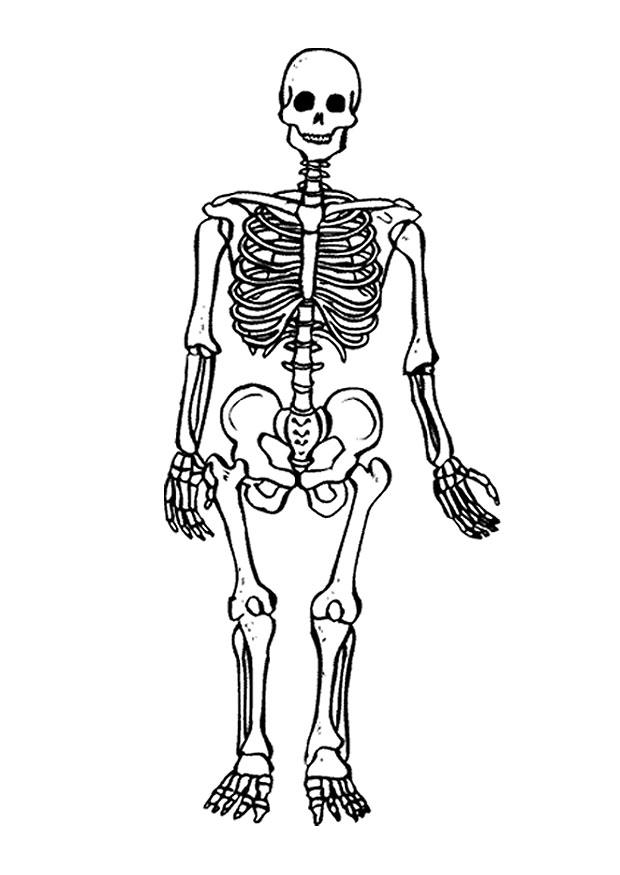 Afbeelding Kip Kleurplaat Kleurplaat Skelet Gratis Kleurplaten Om Te Printen