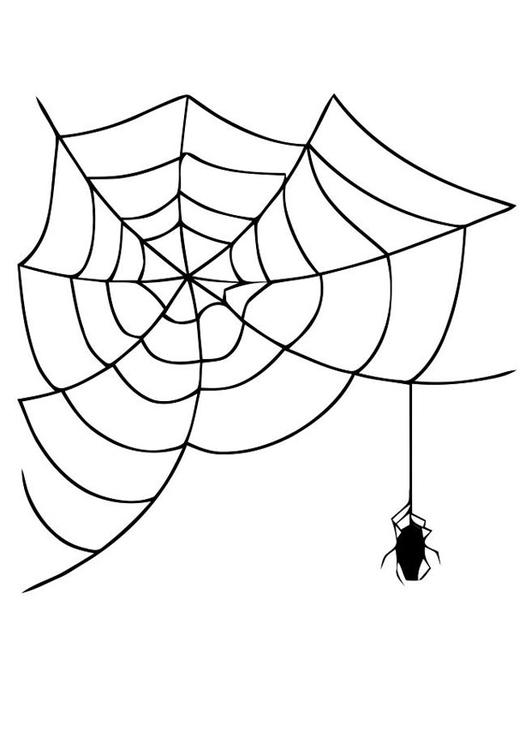 Kleurplaten Vogelspinnen.Spinnenweb Kleurplaat Kids N Fun De 10 Ausmalbilder Von Spinnen