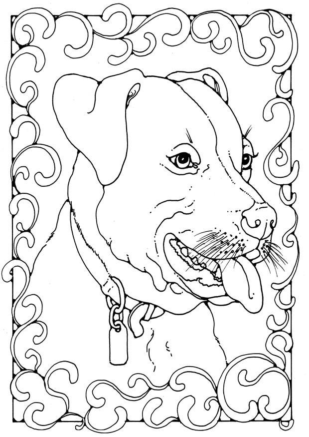 Afbeeldingen Honden Kleurplaat Kleurplaat Staffordshire Bulterri 235 R Afb 28207