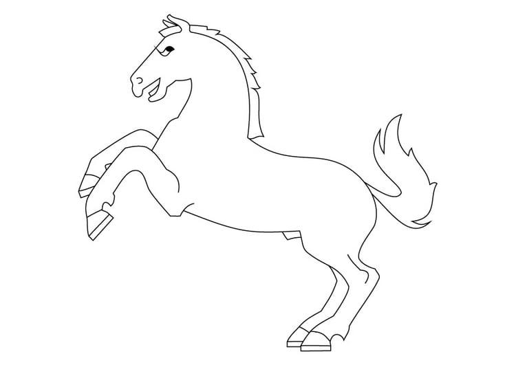 Paard Opgezadeld Kleurplaat Kleurplaat Steigerend Paard Afb 9872
