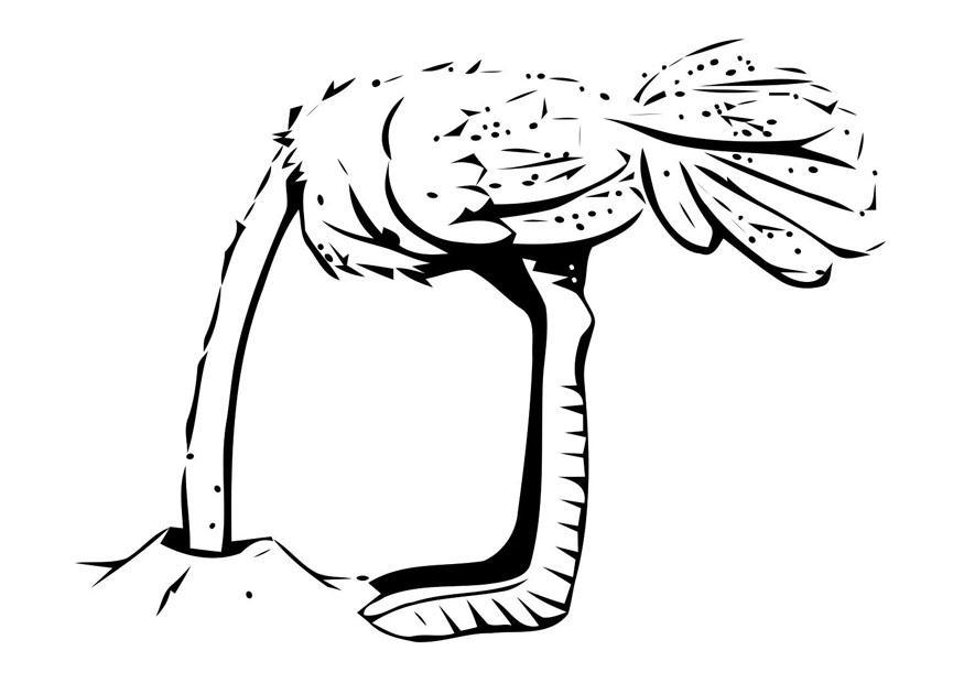 kleurplaat struisvogel met kop in zand gratis kleurplaten
