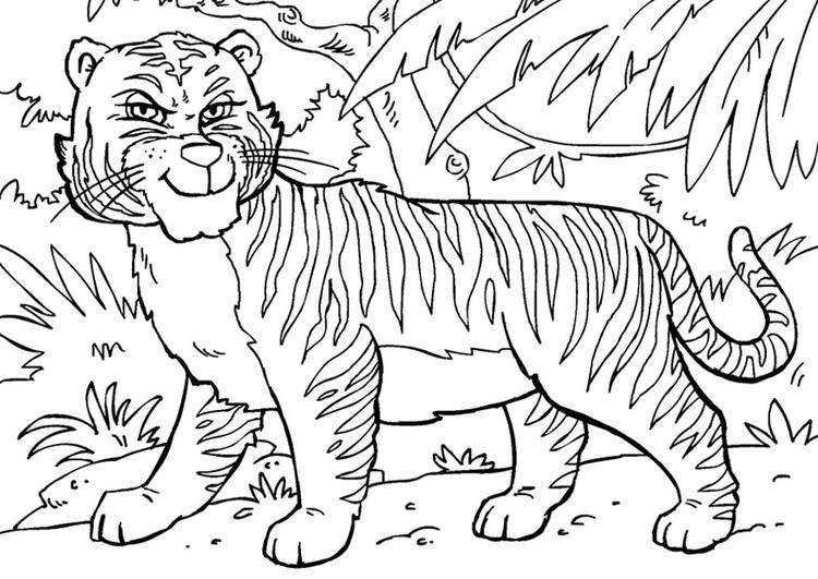 kleurplaat tijger gratis kleurplaten om te printen
