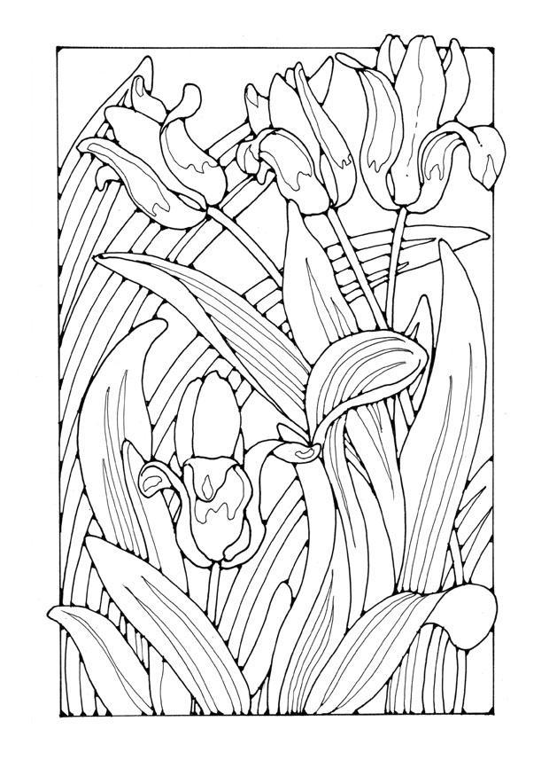 kleurplaat tulpen gratis kleurplaten om te printen