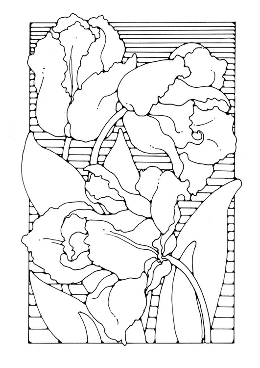 Kleurplaten Bloemen Tulpen.Kleurplaat Tulpen Afb 27746