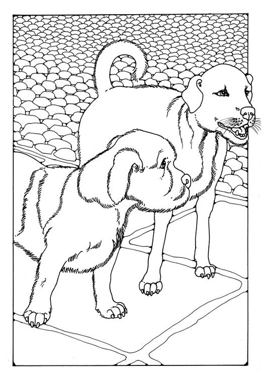 Kleurplaten Printen Honden.Kleurplaat Twee Honden Gratis Kleurplaten Om Te Printen