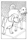 Kleurplaat twee honden