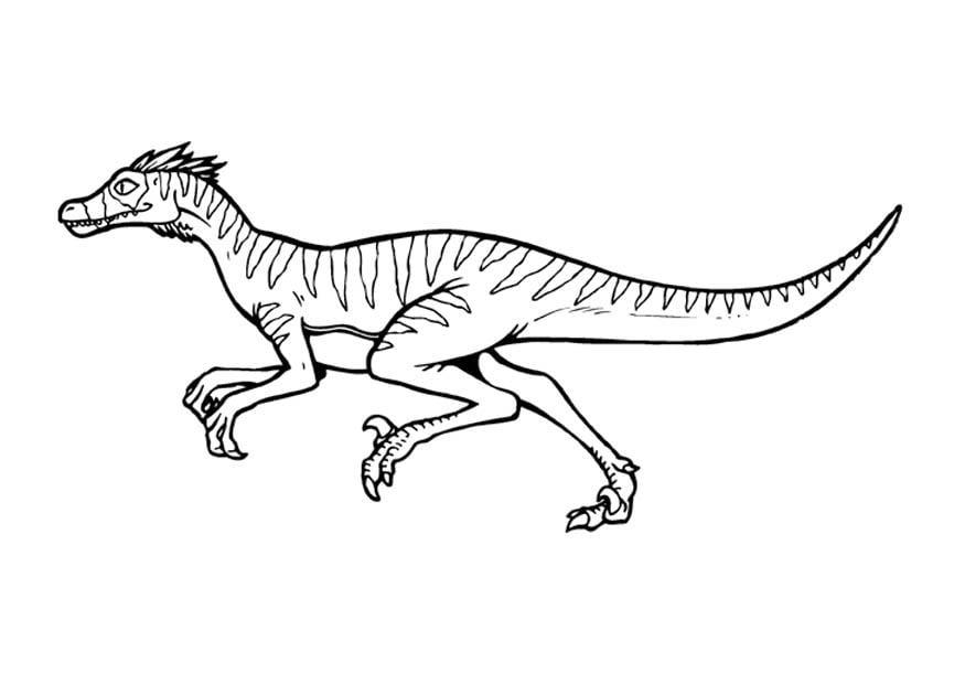 Kleurplaten Raptor Kleurplaat Velociraptor Gratis Kleurplaten Om Te Printen
