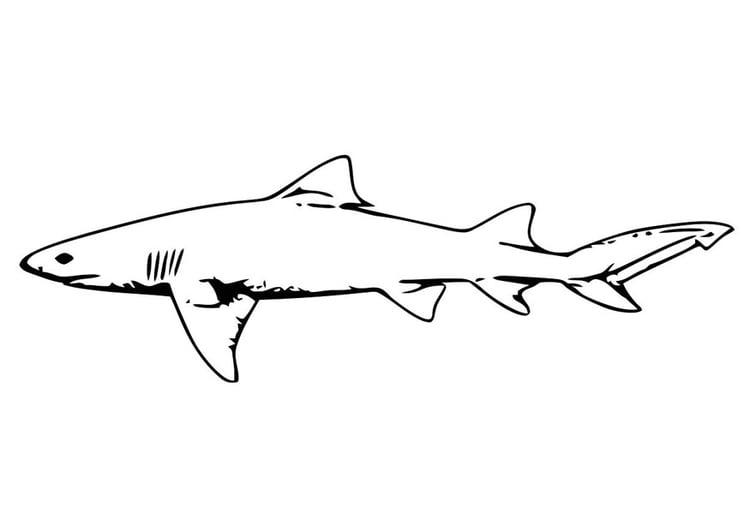 kleurplaat vis haai gratis kleurplaten om te printen