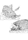 Kleurplaat visjes en garnalen kuisen vis