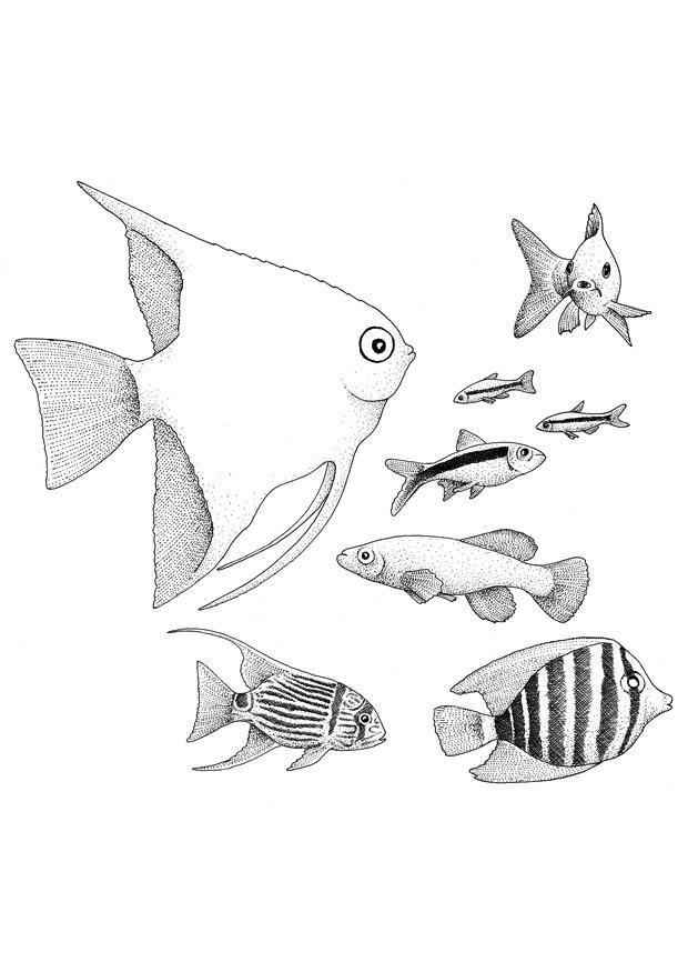 Kleurplaat Vissen Afb 9402