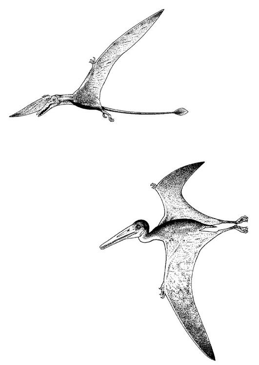 Kleurplaten Vliegende Dino.Kleurplaat Vliegende Dino S Afb 9107 Images