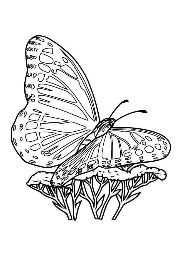 Kleurplaat Vlinder Afb 10920
