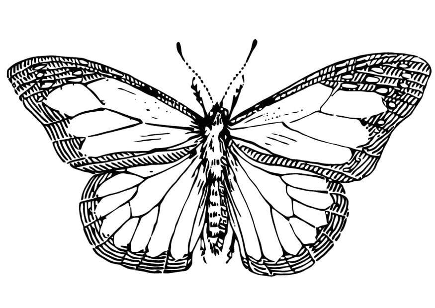 Grote Kleurplaten Vlinders.Kleurplaat Vlinder Afb 13354