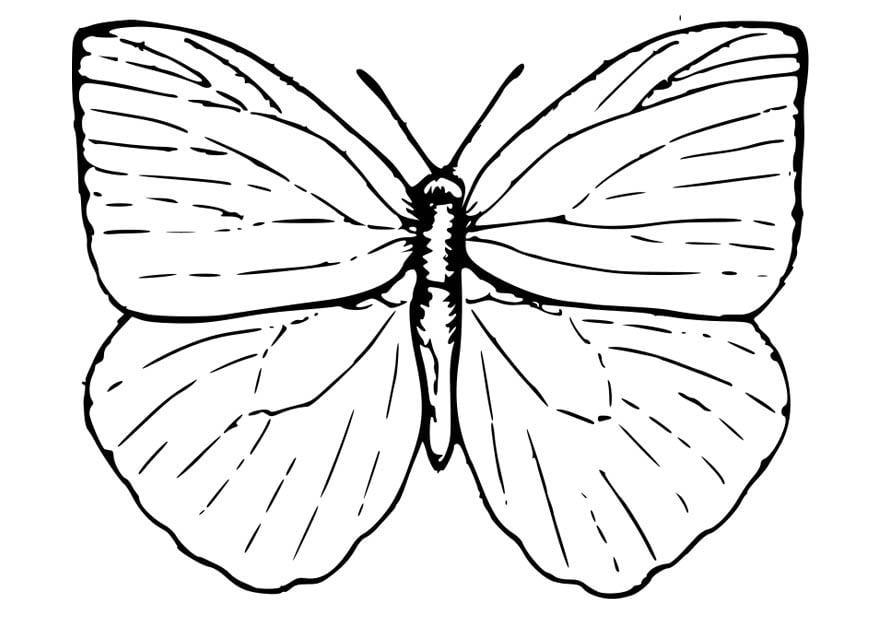 Kleurplaat Vlinder Afb 18572
