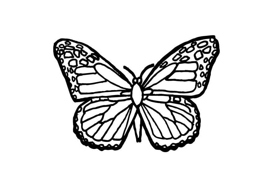 Grote Kleurplaten Vlinders.Kleurplaat Vlinder Afb 9700