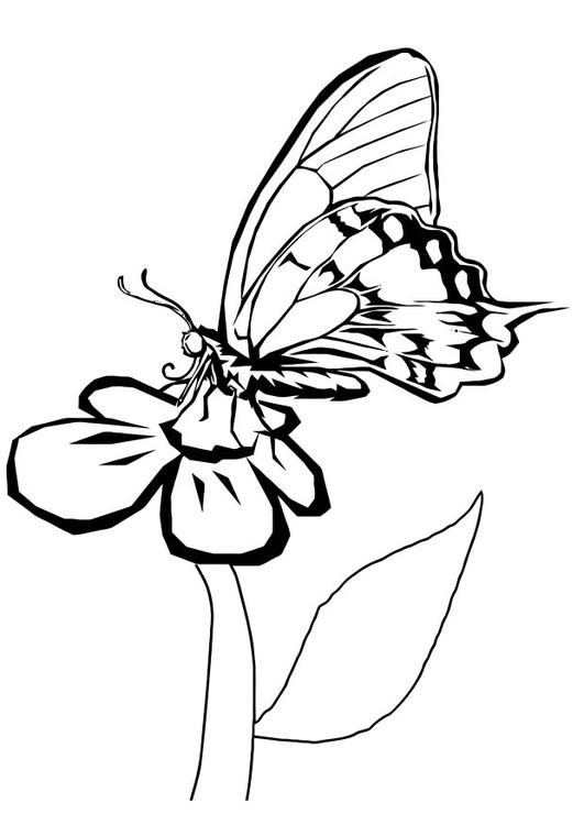 kleurplaat vlinder op bloem gratis kleurplaten om te printen