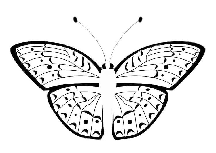 Kleurplaat Vlinder Afb 20670