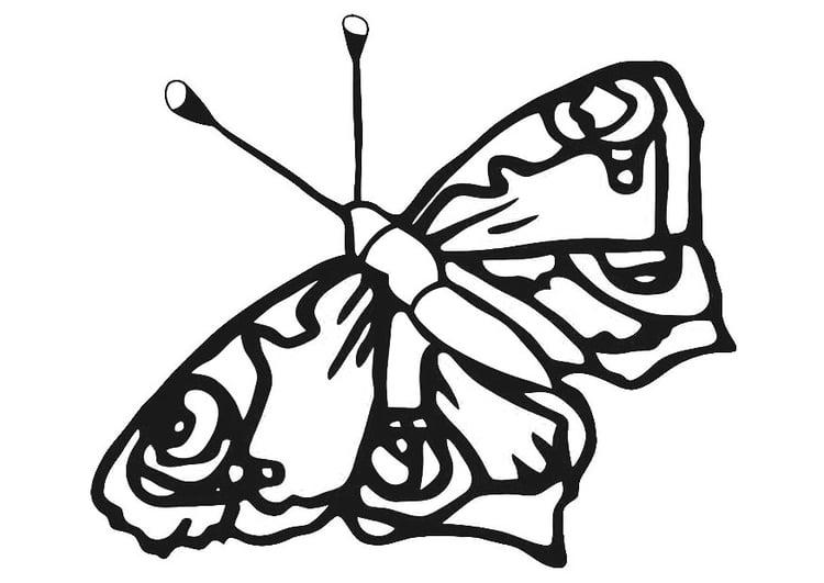 Kleurplaat Vlinder Afb 20671