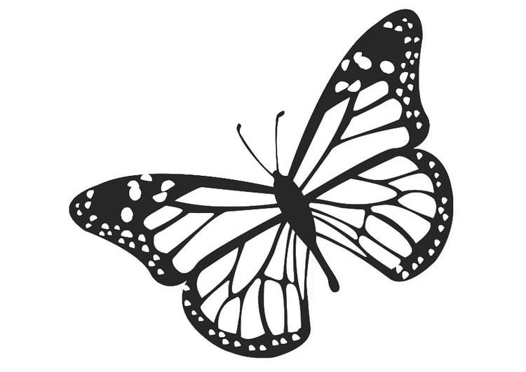 Kleurplaat Vlinder Afb 20674