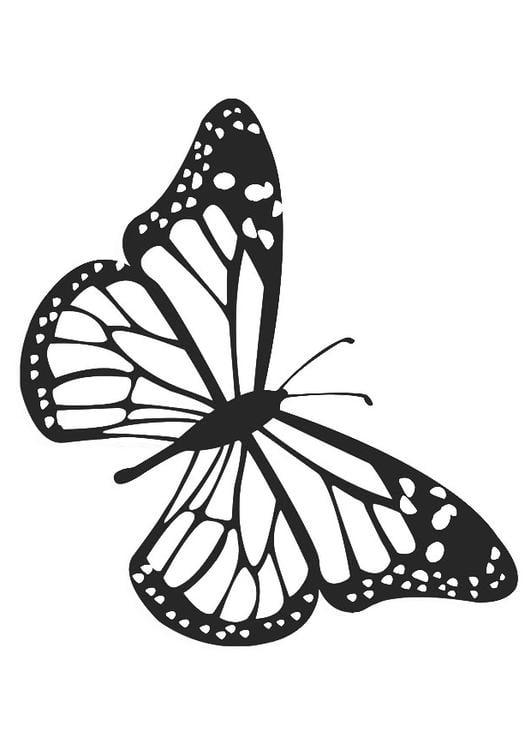Vlinders Kleurplaat Volwassenen Kleurplaat Vlinder Afb 20674