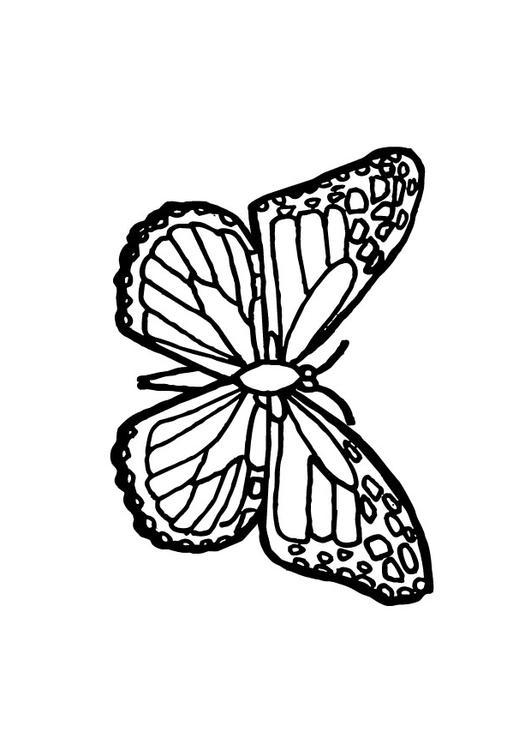 Kleurplaat Vlinder Afb 9700