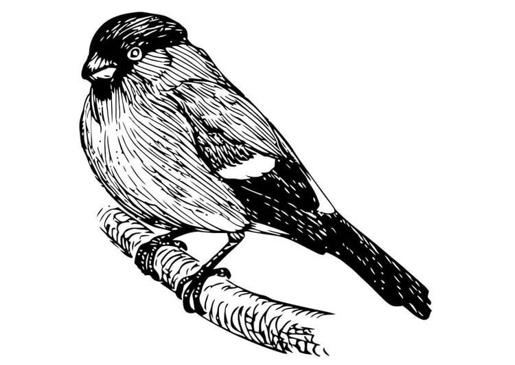 Kleurplaten Van Kleine Vogels.Kleurplaat Vogel Goudvink Afb 20704