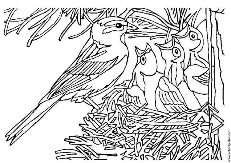 Vogeltje Kleurplaat Kleurplaat Vogel Met Nest Afb 3405