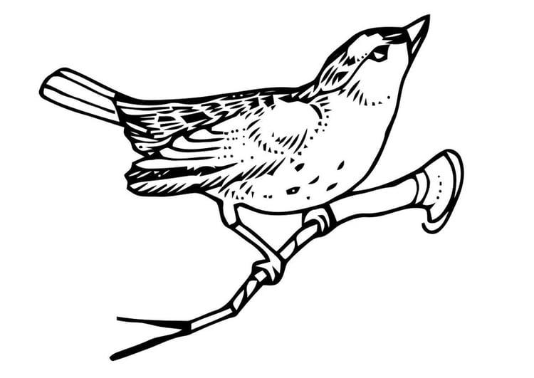 Kleurplaat Vogel Op Tak Afb 20705