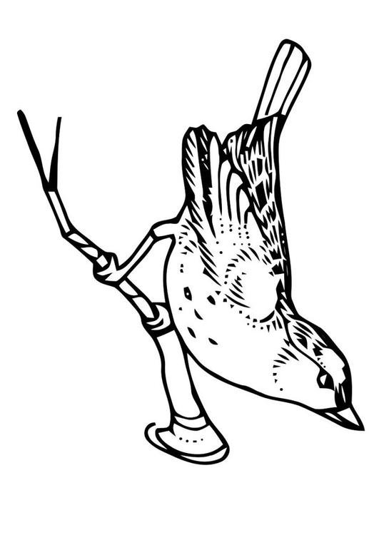 Kleurplaten Dieren Vogels Kleurplaat Vogel Op Tak Afb 20705