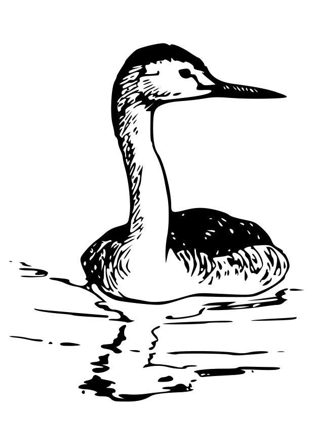 Afbeelding Vogel Kleurplaat Kleurplaat Vogel Zwanenhalsfuut Afb 19050 Images