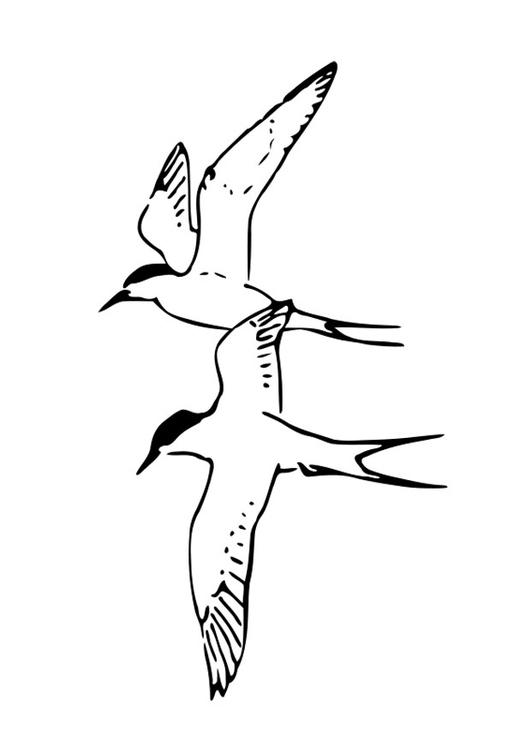 Kleurplaat Vogels Afb 19056