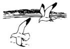 Kleurplaat vogels - zilvermeeuwen