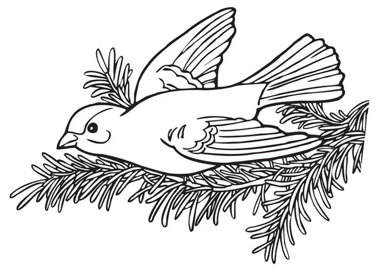 kleurplaat vogeltje afb 9976