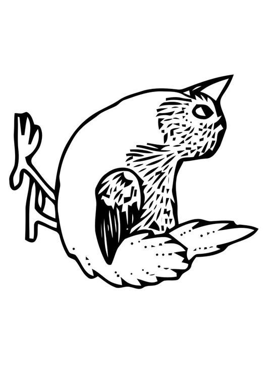 Vogeltje Kleurplaat Kleurplaat Vogeltje Afb 20698