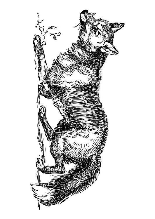 Tekeningen Kleurplaten Dieren Kleurplaat Vos Afb 17330