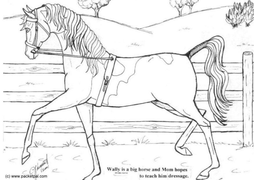 Paard Opgezadeld Kleurplaat Kleurplaat Wally Dressuur Gratis Kleurplaten Om Te Printen