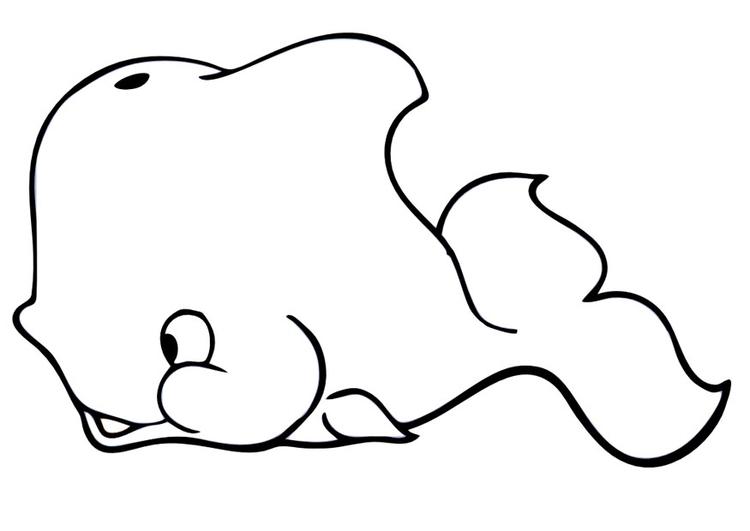 kleurplaat walvis gratis kleurplaten om te printen