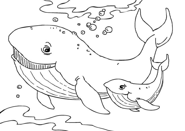 Kleurplaat Walvissen Afb 27231