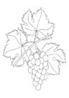 Kleurplaat wijnrank met druiven