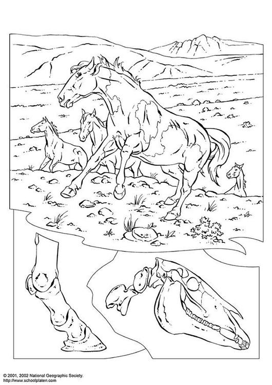 Kleurplaten Van Wilde Paarden.Kleurplaat Wilde Paarden Afb 3080