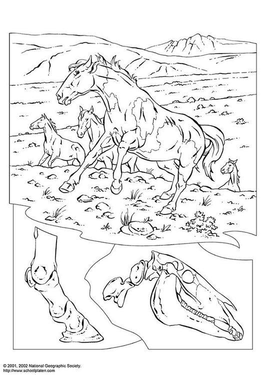 Kleurplaat Wilde Paarden Afb 3080