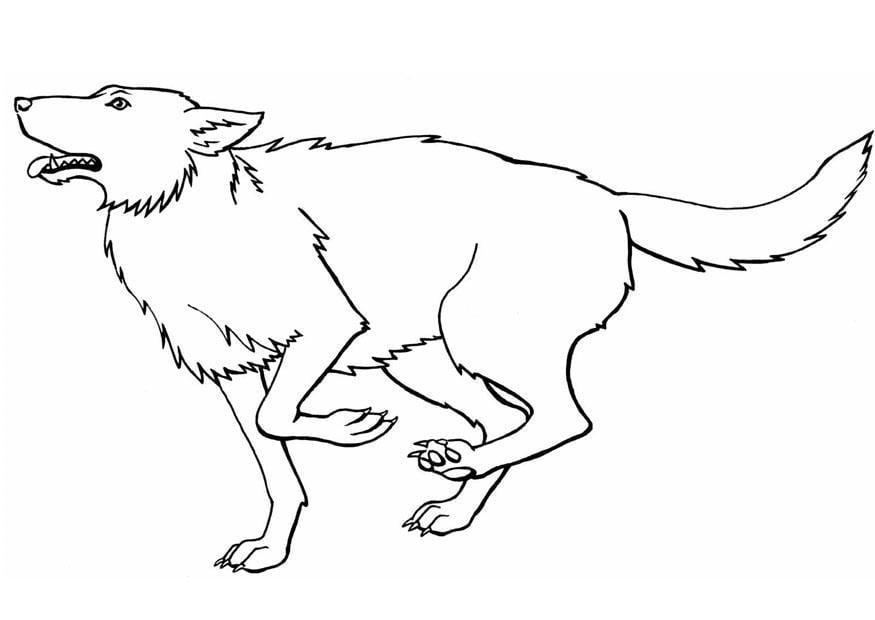 Kleurplaat wolf Afb 8917