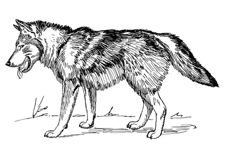 Kleurplaten Wolf.Kleurplaat Wolf Afb 22785